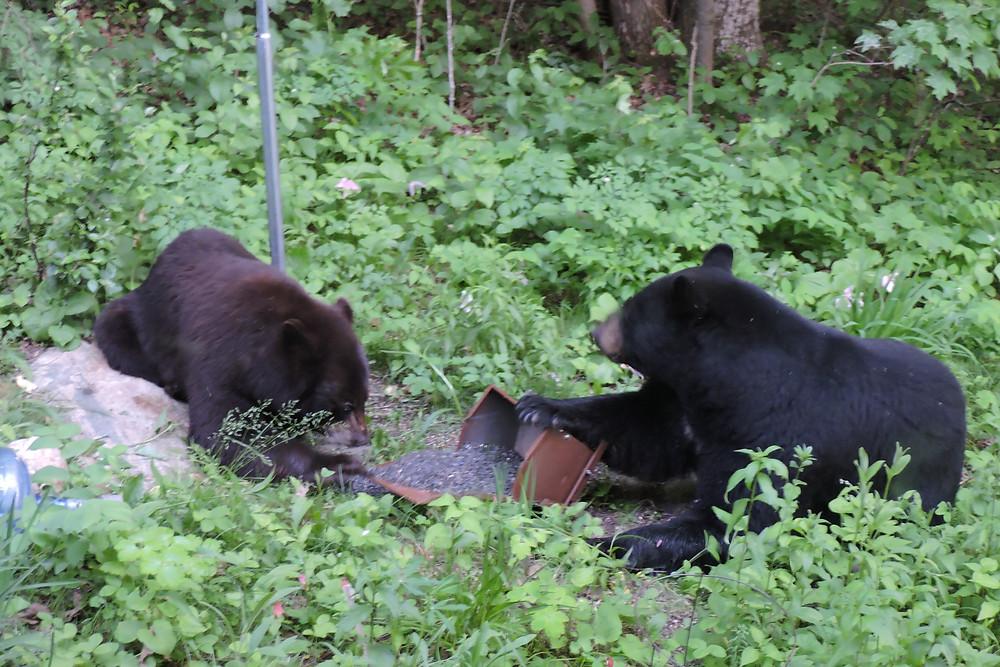 Happy Bears!
