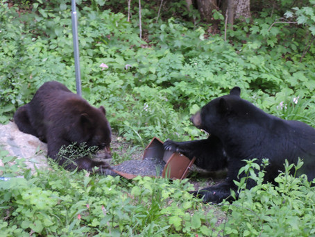 Bears, Bears and more Bears.......