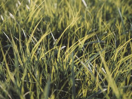 Corona Render Free Tutorial Lesson - Grass Close-up