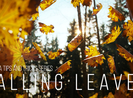 Corona tutorial #7 - Falling Leaves