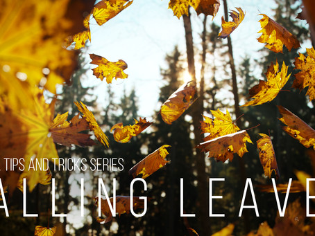 Corona tutorial #7 - Falling Leaves