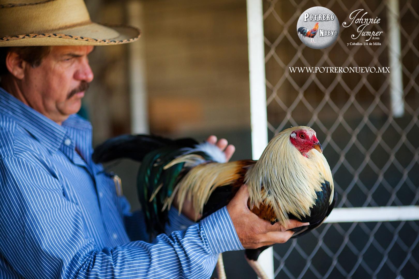 Potrero Nuevo - Criadero de Gallos de Co