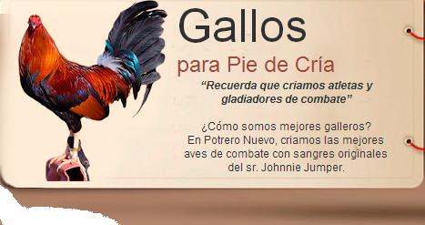 CRIADERO DE GALLOS DE PELEA, GALLOS DE COMBATE, GALLOS PARA PIE DE CRIA, GALLOS RADIO, GALLOS JUMPER, GALLOS GIROS, JOHNNIE JUMPER, RANDY JUMPER, FELIPE CECEÑA. LAS MEJORES SANGRES DE GALLOS DE JOHNNIE JUMPER, FELIPE CECEÑA, JOHNNIE JUMPER, RANDY JUMPER