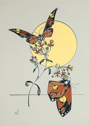 Monarch Butterflies on Milkweed Flower