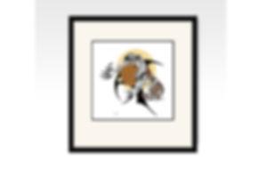 Framed-Kestrel