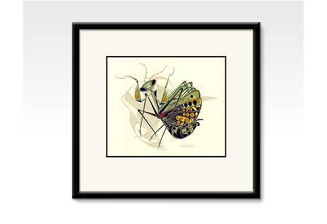 Framed Praying Mantis, Pen Brady Art