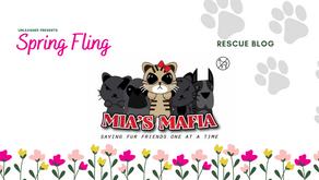 Mia's Mafia has all the cats!