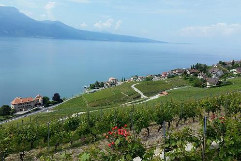 """Offre Kireego """"Evasion & Découverte"""" d'un domaine viticole"""