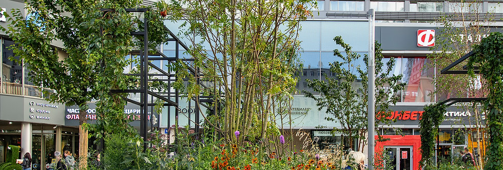 """Рябина  смешанная, Sorbus  commixta, """"Dodong"""", дерево, многоствольный"""