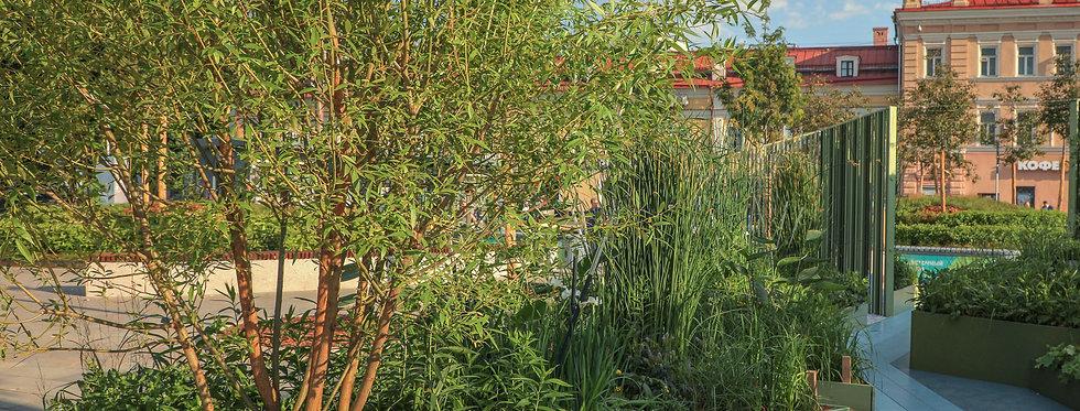 Ива ломкая, Salix fragilis, Булата