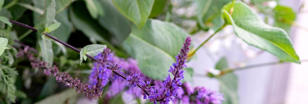 """Шалфей дубравный, Salvia nemorosa, """"Caradonna"""""""