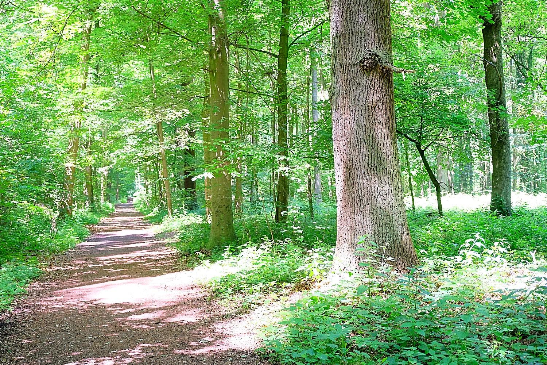 Wald Korschenbroich