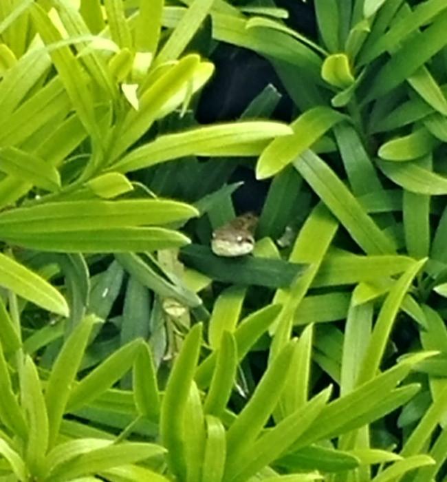 Snake in bush 01!
