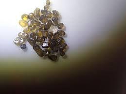 天然石オリビン拾い