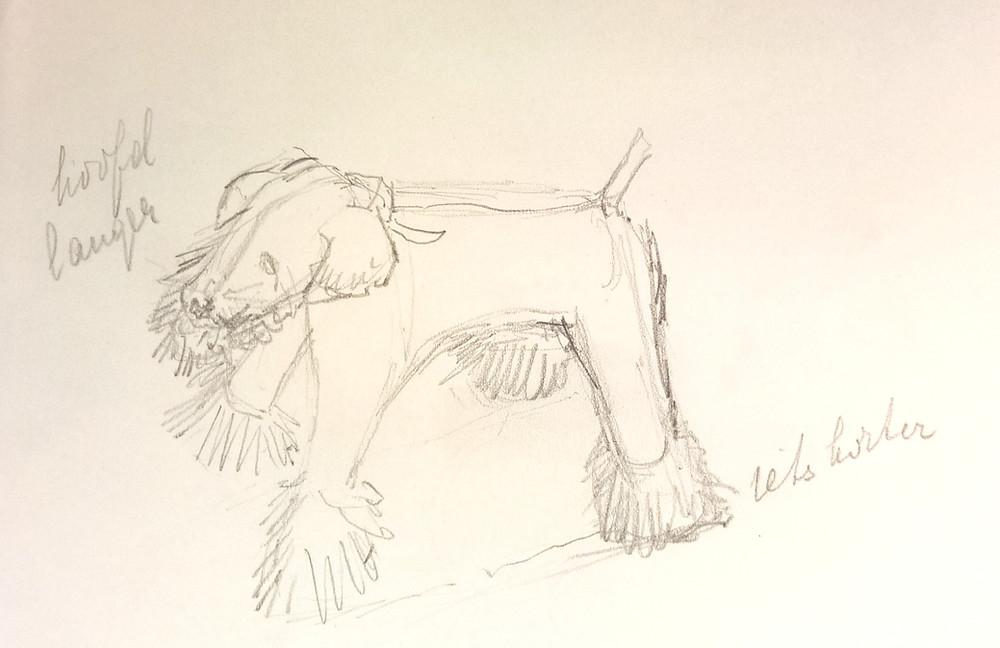 Een hondje getekend door Wilhelmina