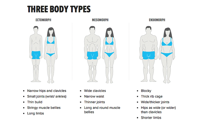 Body-Types.png
