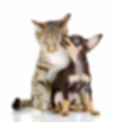 Entretien Animalier | Anim'O Care, Garde d'animaux à domicile à Salon de Provence, 13, 84