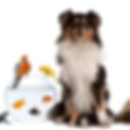 Fondation-HVE-chien-chat-965x300.jpg