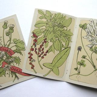 Common Weeds Accordian Book