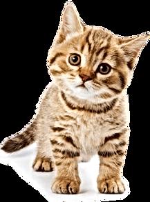 pngfind.com-cat-png-1234419.png