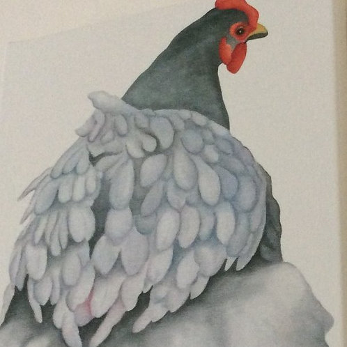 """Florence"" the blue orpington chicken painting"
