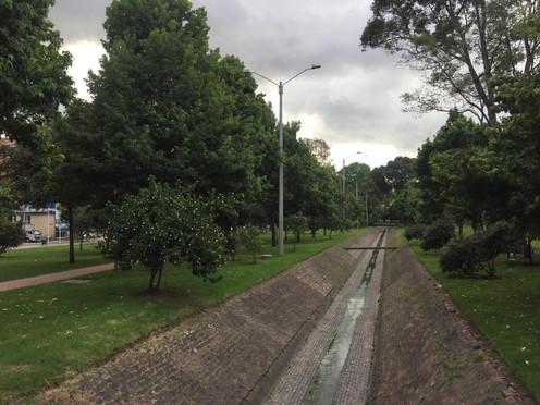 Bogotalada masiva de árboles