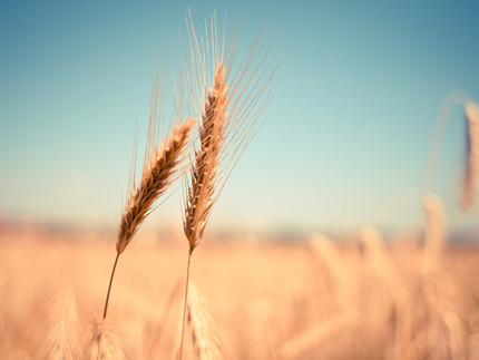 Kiedy mamy do czynienia z wypadkiem rolnika przy pracy?