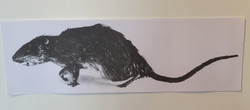 Rat #1 - Christy Rupp