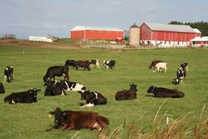 http://3.bp.blogspot.com/-iu3YHAVq6Ag/T6RXENemD4I/AAAAAAAAAAs/x9JuU4tmOH0/s400/cows-in-the-pasture-of-a-wisconsin-dairy-farm-wi139.jpg