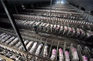 https://whativegan.files.wordpress.com/2014/04/factory_farm_pig-454x301.jpg