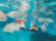 cozumel-mexico-reef-snorkeling-fish-shor