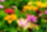 beautiful-blooming-blossom-blur-298246.j