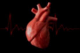 Cardiology, organ transplant and cardiov