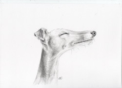 Happy Greyhound