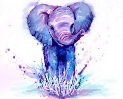 Elephant baby #2