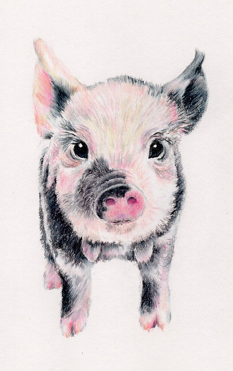 Print of original drawing of a pig