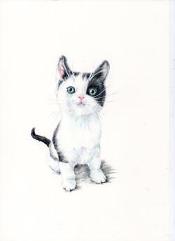 Hugo - Kitten