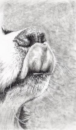 Puppy tongue