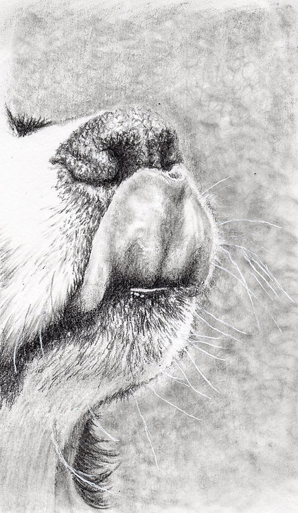 Print of original drawing of a Puppies tongue by Sarah Caisey