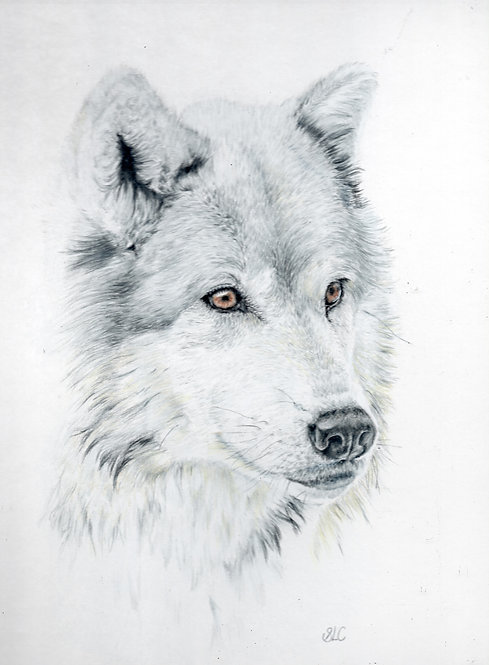 Original Drawing of a Wolf