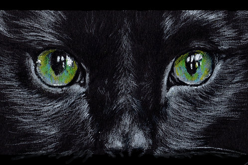 Print of an original drawing of cats eyes by Sarah Caisey