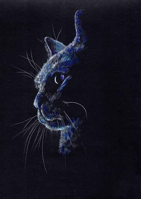 Print of an original drawing of a cat by Sarah Caisey