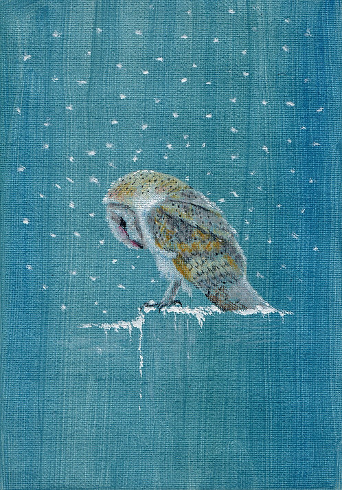 Blank card. Barn owl in the snow. Print of drawing by Sarah Caisey