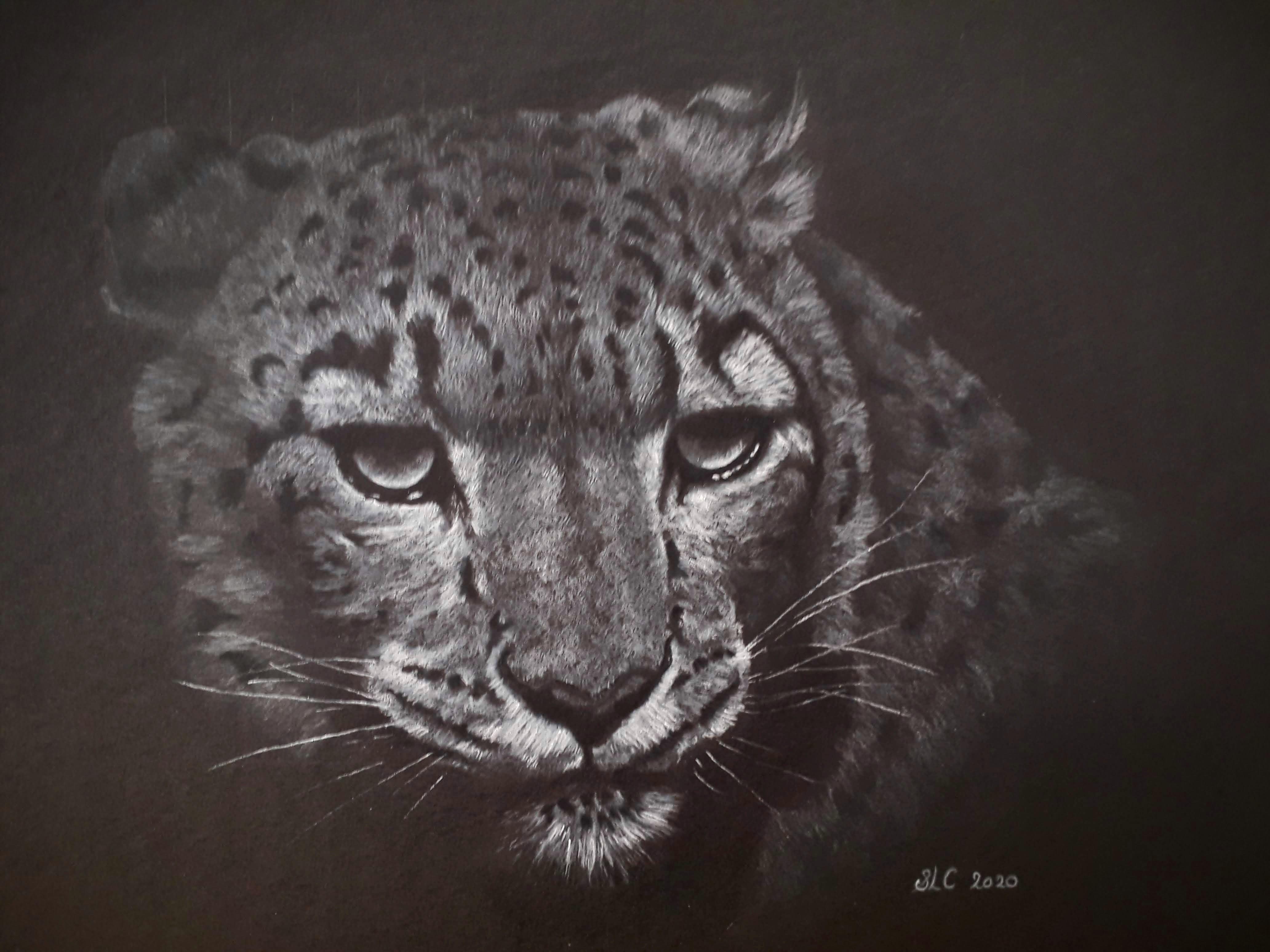 Snow Leopard #2
