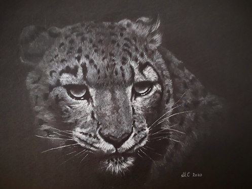 Limited Edition Giclee print of a Snow Leopard