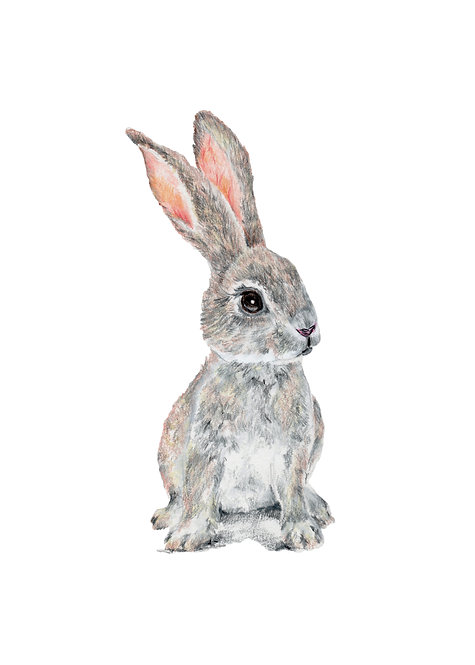 Blank card. Bunny. Print of drawing by Sarah Caisey