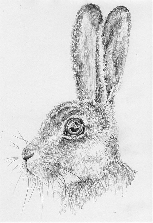 Print of an original drawing of a Hare