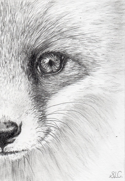 Print of original drawing of a fox cubby Sarah Caisey