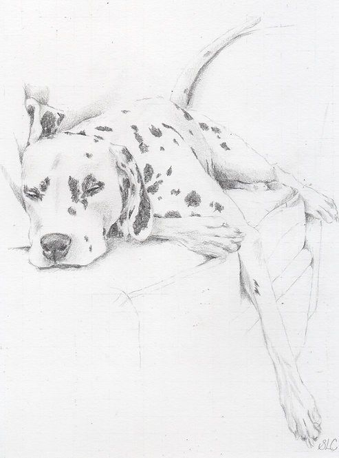 Print of original drawing of a Dalmation by Sarah Caisey
