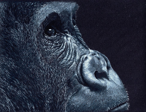 Limited Edition Giclee Print of a Gorilla
